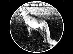 Wolf For Mac v1.35.3 优秀的网页设计工具